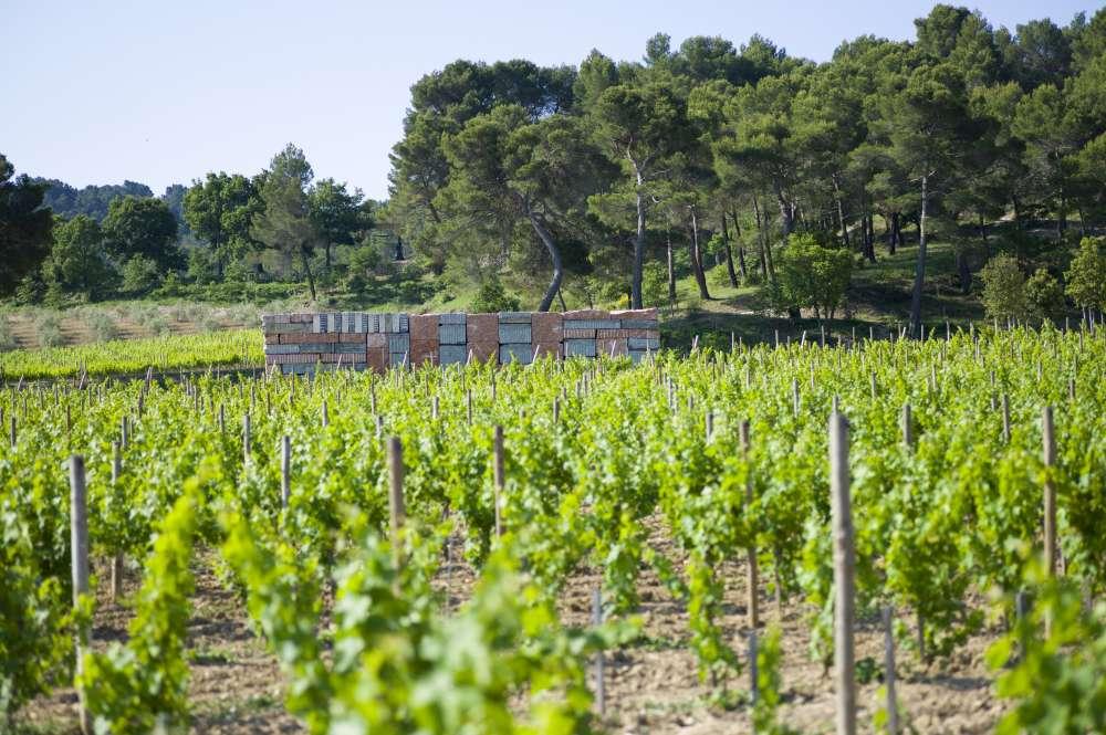page-philosophie-domaine-viticole-2